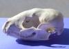 1389271_animal_skull_2